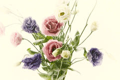 Old style flowers Stock Image