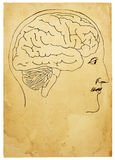 Old Style Head and Brain Illustration. An old style line art illustration of head and brain on aged, stained paper. Isolated on white, with clipping path Royalty Free Stock Photography