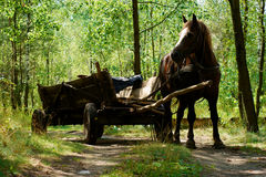 Old-style horse wagon Stock Images