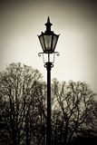 Old style lantern with trees in background. Old style street lantern with trees in background Royalty Free Stock Photos