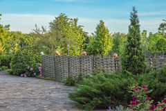 Old style lath fence with jugs. Surrounded by green trees, junipers, peony and roses Stock Photos