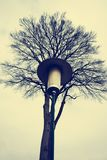 Old style street lantern. With trees in background Royalty Free Stock Photos