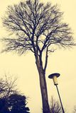 Old style street lantern. With trees in background Stock Images