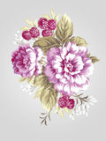 Old styled 007. Hand drawn Peony bouquet - Simple background Stock Image