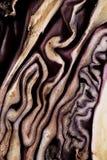 Old-styled Beschaffenheit des Hälfte-faulen Rotkohls Lizenzfreie Stockbilder