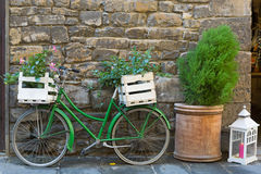Old styled Bicycle in green with box of Mandevilla flowering plant parking outside building. On street, Iatly royalty free stock photos