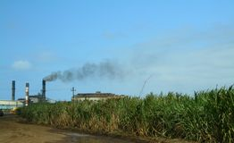 Old sugar mill & sugar cane field. Old sugar processing mill & a field of sugar Stock Images