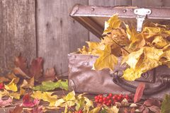 Old suitcase with autumn leaves on wooden background stock image