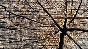 Old sun bleached wood crest. Old silver grey sun bleached wood crest structure with naturally cracks royalty free stock photo