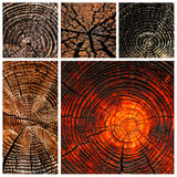 Old sun dried wood and timber motives Stock Image