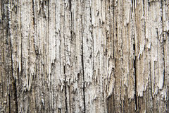 Old surface wood background Stock Photos