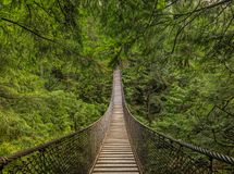 Free Old Suspension Bridge Above A River, Among Pine Trees On A Mountain In Lynn Canyon Park Forest In Vancouver, Canada Royalty Free Stock Photo - 166449665