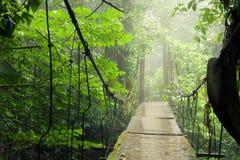 Free Old Suspension Bridge In Rainforest Royalty Free Stock Photo - 102042055