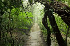 Free Old Suspension Bridge In Rainforest Royalty Free Stock Photography - 102304667