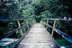 Old suspension bridge in the jungle Royalty Free Stock Photography