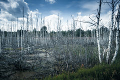 Old swamp with dead trees Stock Photography