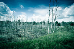 Old swamp with dead trees Stock Images