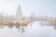 Old swamp in dense morning fog Stock Photos