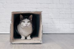 Tabby cat sit in a lcardboard box and looks to the camera. Old tabby cat sin in a cardboard box and look to the camera stock image