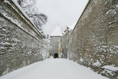 Old Tallinn, Estonia, winter  Royalty Free Stock Images