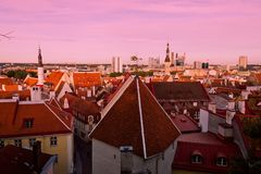 Tile roofs of old Tallinn. Old Tallinn, top view on roofs tile Royalty Free Stock Images