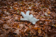 Old teddy bear lies alone in the park on the dry leaves. Royalty Free Stock Photo
