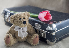 Old teddy bear Royalty Free Stock Images