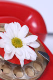 Old telephone and white flower. An old telephone with a rotary dial and white flower Royalty Free Stock Photo