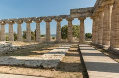 The old temple of Paestum. Paestum, Italy, was a major ansient Greek city on the coast of the Tyrrhenian sea in Great Graecia. The Temples of Paestum was built royalty free stock photos