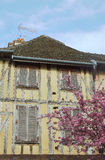 Old tenement and flowering almond tree. In Troyes, France Royalty Free Stock Photo