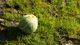 Close up tennis ball on grass in sunshine