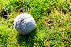 Old tennis ball on green grass Royalty Free Stock Image