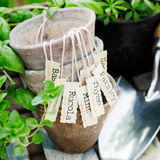 Old terracotta flowerpots. Old empty terracotta flowerpots in a herb garden with decorative labels showing the names of various herbs royalty free stock photography