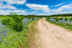 Old Texas Dirt Road in Field of  Texas Bluebonnet Wildflowers Stock Photography
