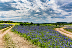 Free Old Texas Dirt Road In Field Of  Texas Bluebonnet Wildflowers Royalty Free Stock Photo - 64011045
