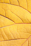 Old texture of leaf. The Old texture of leaf Royalty Free Stock Image