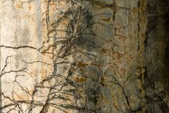 Old textured stone wall with dry branches on it. Grunge background royalty free stock images