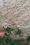 Old textured wall background royalty free stock image
