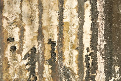 Old textured wall with mold. Background royalty free stock photography