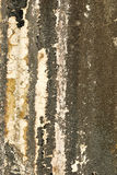 Old textured wall with mold. Background royalty free stock photos