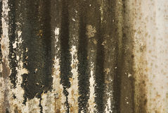 Old textured wall with mold Royalty Free Stock Image