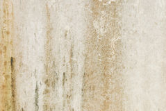 Old textured wall with mold Stock Photos