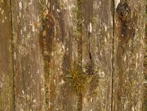 Old textured wood. Stock Photography