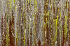 Old Textured wooden fence background. With green moss Stock Image