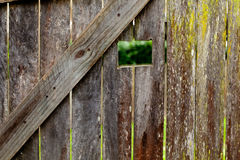 Old Textured wooden fence background. With moss Royalty Free Stock Image