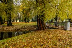 Old thick trees on the banks of a narrow river in the autumn city public park Stock Photography