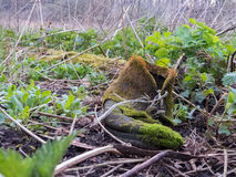 Old thrown by boot Royalty Free Stock Image