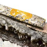 Old tile with orange lichen. Yellow and orange lichen on old roof tiles background. Old architecture stock photos