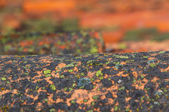 Old Tile Undulating with Lichens Royalty Free Stock Images