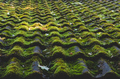 Old tiled roof covered by moss Royalty Free Stock Images